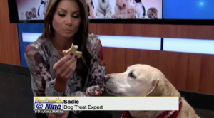 Fox Daytime at Nine Dog Treats Alexis Quiroga