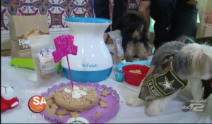 PAWsitively Sweet Bakery Dog Birthday Party SA Live