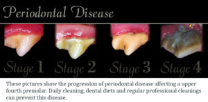 canine periodontal disease