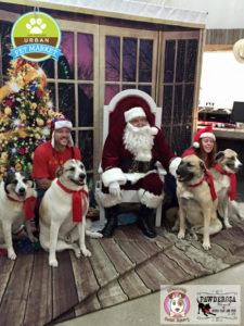 Pet Santa Event